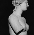 Venus De Milo by Greek School