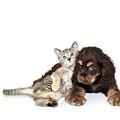 Very Sweet Kitten Lying On Puppy by StockImage