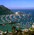 View Of Avalon Harbor by Cliff Wassmann