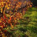 Vineyard 13 by Xueling Zou