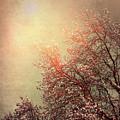 Vintage Cherry Blossom by Wim Lanclus