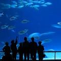 Visitors At An Aquarium by Yali Shi