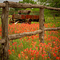 Wagon In Paintbrush - Texas Wildflowers Wagon Fence Landscape Flowers by Jon Holiday