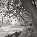 Walden Pond by Heather Weikel