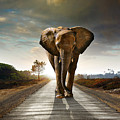 Walking Elephant by Carlos Caetano