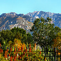 Wasatch Mountains In Autumn by Tracie Kaska