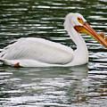 Water Bird With Notches by Douglas Barnett