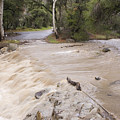 Water Flowing In The North Fork by Rich Reid