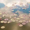 Water Lilies In Schoenbrunn Vienna Austria by Julia Hiebaum