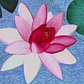 Water Lilly by Loraine LeBlanc