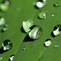 Waterdrops by Melanie Viola