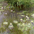Waterlilies At Midday by Claude Monet