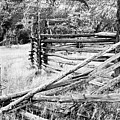 Weathered Fence by Larry Ricker