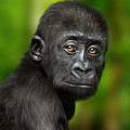 Western Lowland Gorilla Baby by Julie L Hoddinott
