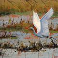 Wetland Heron by Graham Gercken