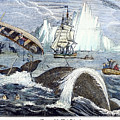 Whaling, 1833 by Granger