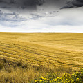 Wheat Fields With Storm by John Trax