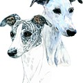 Whippet Pair by Kathleen Sepulveda