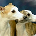 Whippet Watching by Maxine Bochnia
