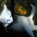 White Kitten by David Lee Thompson