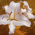 White Lilies. Time To Be Romantic by Jenny Rainbow