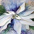 White Poinsettia by Mindy Newman