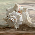 White Shell by Linda Sannuti