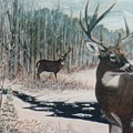Whitetail Deer by Ben Kiger