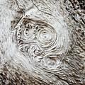 Whorly Wood by Lynda Dawson-Youngclaus