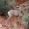 Wild And Pretty - Garden Of The Gods Colorado Springs by Christine Till
