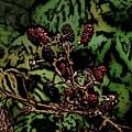 Wild Berries by David Lane