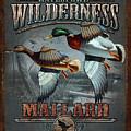 Wilderness Mallard by JQ Licensing