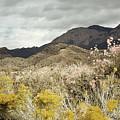 Wildflower Mountain by Andrea Hazel Ihlefeld