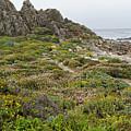 Wildflowers At China Rock - Pebble Beach - California by Brendan Reals