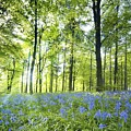 Wildflowers In A Forest Of Trees by John Short