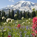 Wildflowers In Mount Rainier National by Dan Sherwood