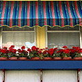 Window Box Geraniums by Colleen Kammerer
