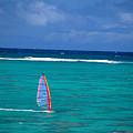 Windsurfing In Clear Ocea by Allan Seiden - Printscapes