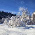 Winter Blanket by Mike  Dawson