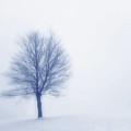 Winter Blues by Randy Steele