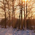 Winter Break by Wim Lanclus