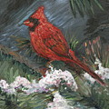 Winter Cardinal by Nadine Rippelmeyer