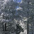 Winter Pathway by Sandra Bronstein