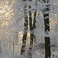 Winter Sun by Odd Jeppesen