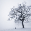 Winter Tree And Bench In Fog by Elena Elisseeva