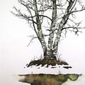 Winters Birch by Carolyn Doe