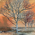 Winter's Dawn by Shawna Rowe