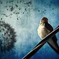 Wishing Swallow by Nancy  Coelho