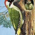 Woodpecker by RB Davis