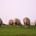 Wooly Bottoms by Angel  Tarantella